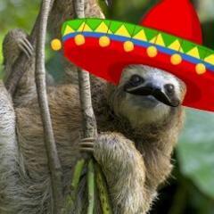 mexican_sloth